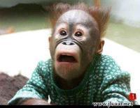 Photo de monkey prophet